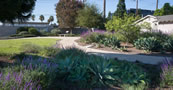 Westminster Water Conservation Garden