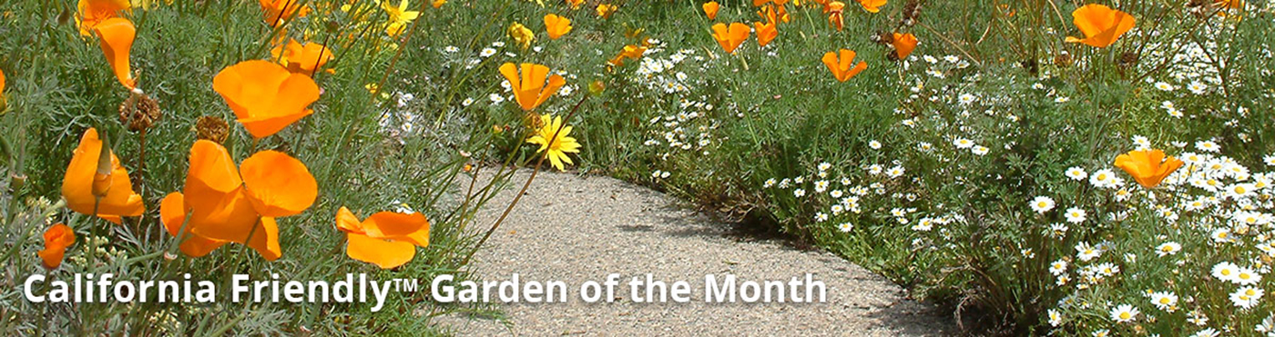 California Friendly Garden of the Month
