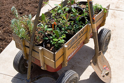 Wagon with plants